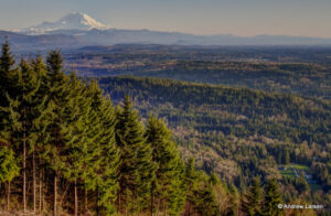 Forest view of Mt. Rainer from Poo Poo Point on Tiger Mountain in Washington