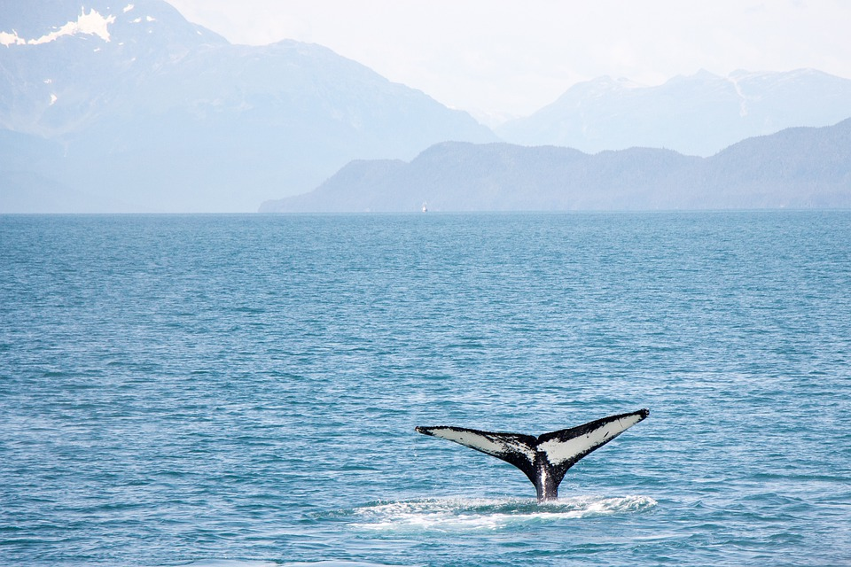 Whale sighting on an Alaska cruise ship with interline travel